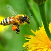 Pesticides en France